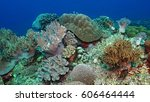 Variety Of Soft And Hard Coral...