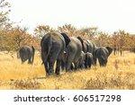 Herd Of African Elephants...