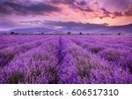 Lavender Field Sunset And Lines