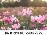 wildflowers meadow in pink...   Shutterstock . vector #606539780