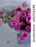 Small photo of Pink ranunculus and pink tulips arrangement in iron vase with one pink ranunculus in sharp focus and remaining ranunculus blurred