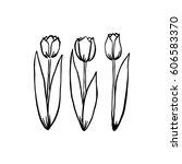 hand drawn set of  tulips.... | Shutterstock .eps vector #606583370