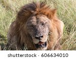 Africa  Kenya  Masai Mara...