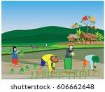 farmer transplant seeding... | Shutterstock .eps vector #606662648
