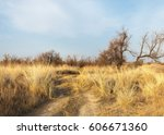 Sand Spring Steppe. Trees And...