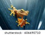 frog  tree frog    Shutterstock . vector #606690710