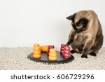 Stock photo clever siamese cat solving pet puzzle to get to the treats 606729296