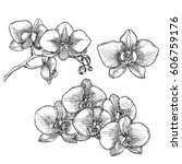 hand drawn orchid.  | Shutterstock .eps vector #606759176