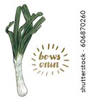 bows onion. hand drawn vector... | Shutterstock .eps vector #606870260