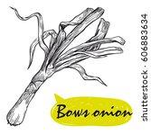 bows onion sketch. harvesting