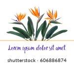 bird of paradise  tropical... | Shutterstock .eps vector #606886874
