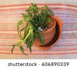 composition of plants in a... | Shutterstock . vector #606890339