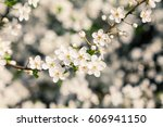 white spring flowers close up... | Shutterstock . vector #606941150