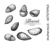 almond hand drawn collection by ... | Shutterstock .eps vector #607070963