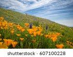 california poppies ... | Shutterstock . vector #607100228