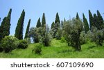 Cypress Trees Landscape And...