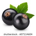 Black Currant Branch Isolated...