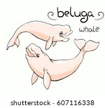 white whale  beluga  in 2 poses ... | Shutterstock .eps vector #607116338