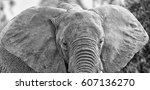 Small photo of Elephant ready to charge