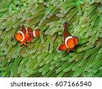 orange nemo clown fish in the... | Shutterstock . vector #607166540