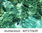 two coral fishes in crystal...   Shutterstock . vector #607172639