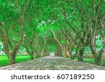Tree Tunnel With Green Leaves...
