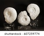 Ammonite Fossil Sculptures One...