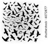 vector flying birds | Shutterstock .eps vector #6072877