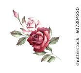 Stock photo the image of a rose hand draw watercolor illustration 607304330