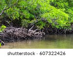 Beautiful Mangrove In Praia Dos ...