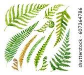 Leaves Fern Watercolor. Set Of...