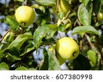 An Apple Tree With Yellow...
