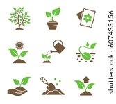 Plant Growing Icons Set. Green...