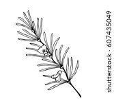 rooibos tea plant  leaf  flower.... | Shutterstock .eps vector #607435049