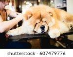 female groomer brushing chow... | Shutterstock . vector #607479776