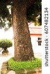 the tree | Shutterstock . vector #607482134
