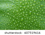 beautiful green leaf with drops ... | Shutterstock . vector #607519616