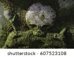 Skull Overgrown With Green Moss