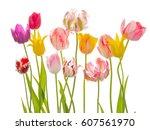 Bright Beautiful Flowers Of...