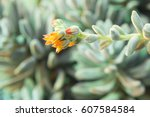 yellow red cactus flowers close ... | Shutterstock . vector #607584584
