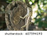 a yellow lizard laid on a wood... | Shutterstock . vector #607594193