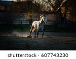 Stock photo horse galloping 607743230