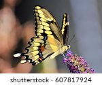 Stock photo butterfly isolated 607817924