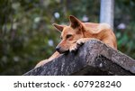 tired dog on the stone          ... | Shutterstock . vector #607928240
