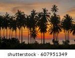 Western Soil In The Coconut...