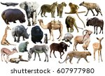 set of different african... | Shutterstock . vector #607977980
