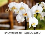 white orchids on spring time | Shutterstock . vector #608001350
