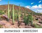 saguaros in sonoran desert near ... | Shutterstock . vector #608032364