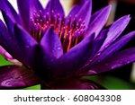 Lotus.  Exotic Flower....
