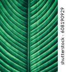 striped of tropical leaf ... | Shutterstock . vector #608190929
